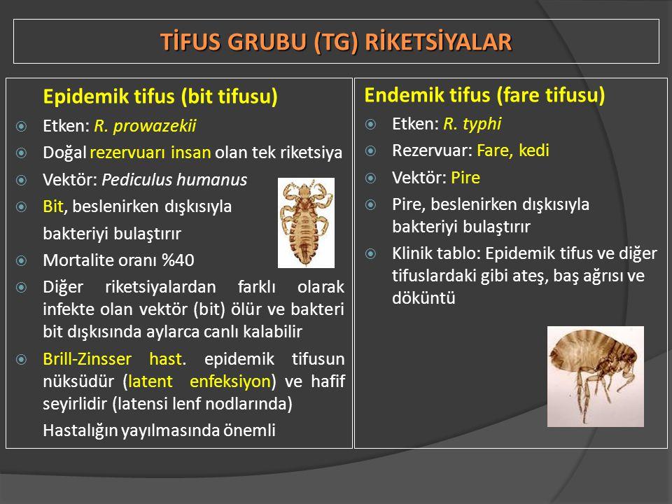 TİFUS GRUBU (TG) RİKETSİYALAR Epidemik tifus (bit tifusu)  Etken: R. prowazekii  Doğal rezervuarı insan olan tek riketsiya  Vektör: Pediculus human