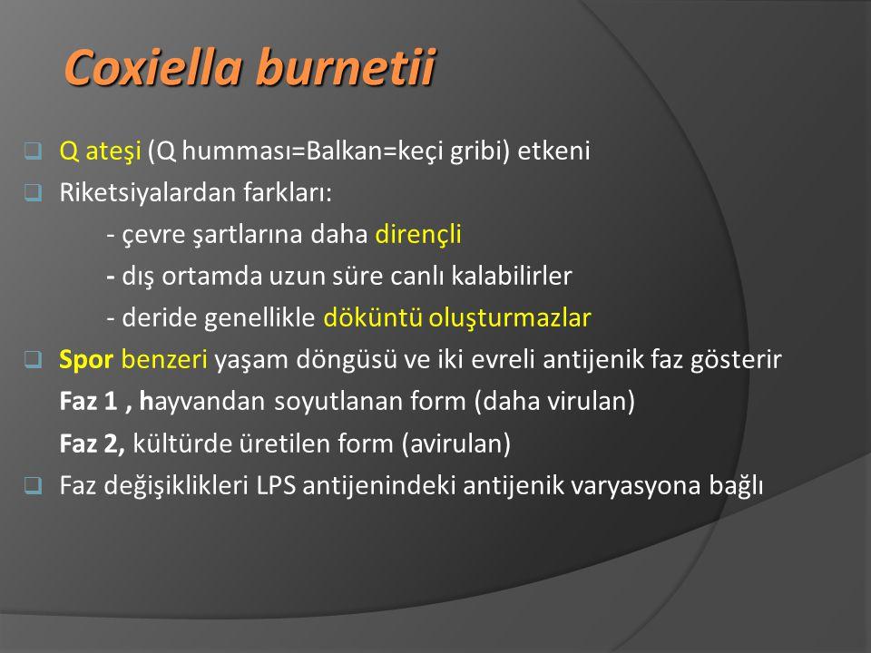 Coxiella burnetii  Q ateşi (Q humması=Balkan=keçi gribi) etkeni  Riketsiyalardan farkları: - çevre şartlarına daha dirençli - dış ortamda uzun süre canlı kalabilirler - deride genellikle döküntü oluşturmazlar  Spor benzeri yaşam döngüsü ve iki evreli antijenik faz gösterir Faz 1, hayvandan soyutlanan form (daha virulan) Faz 2, kültürde üretilen form (avirulan)  Faz değişiklikleri LPS antijenindeki antijenik varyasyona bağlı