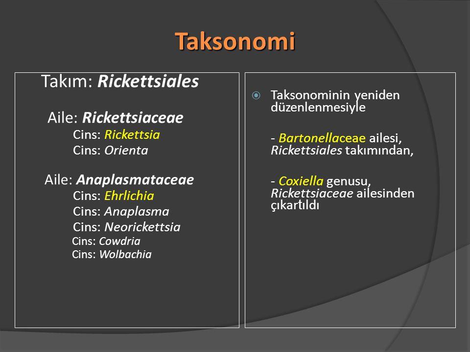 Taksonomi Takım: Rickettsiales Aile: Rickettsiaceae Cins: Rickettsia Cins: Orienta Aile: Anaplasmataceae Cins: Ehrlichia Cins: Anaplasma Cins: Neorick