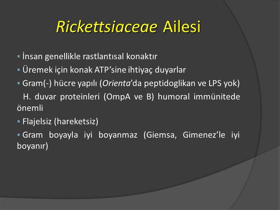 Rickettsiaceae Ailesi § İnsan genellikle rastlantısal konaktır § Üremek için konak ATP'sine ihtiyaç duyarlar § Gram(-) hücre yapılı (Orienta'da peptidoglikan ve LPS yok) H.