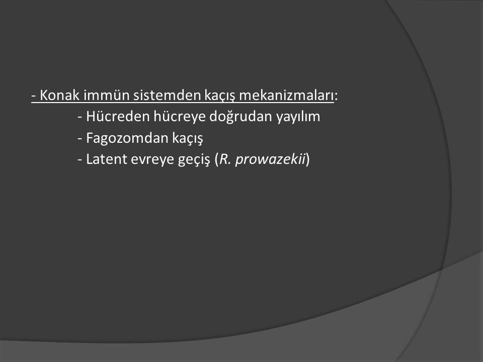 - Konak immün sistemden kaçış mekanizmaları: - Hücreden hücreye doğrudan yayılım - Fagozomdan kaçış - Latent evreye geçiş (R. prowazekii)