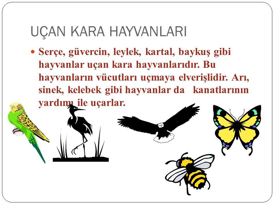 UÇAN KARA HAYVANLARI Serçe, güvercin, leylek, kartal, baykuş gibi hayvanlar uçan kara hayvanlarıdır. Bu hayvanların vücutları uçmaya elverişlidir. Arı