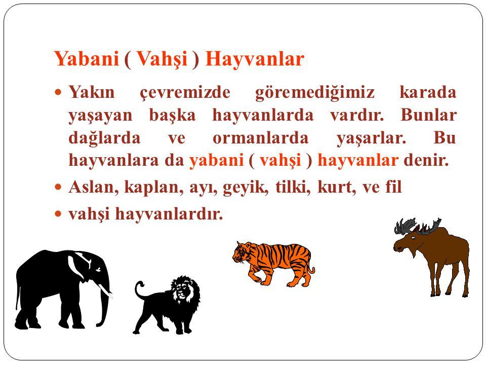 Yabani ( Vahşi ) Hayvanlar Yakın çevremizde göremediğimiz karada yaşayan başka hayvanlarda vardır. Bunlar dağlarda ve ormanlarda yaşarlar. Bu hayvanla