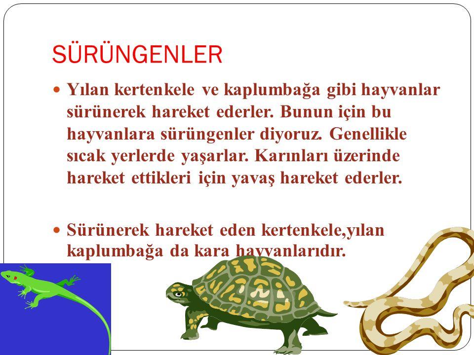 SÜRÜNGENLER Yılan kertenkele ve kaplumbağa gibi hayvanlar sürünerek hareket ederler. Bunun için bu hayvanlara sürüngenler diyoruz. Genellikle sıcak ye