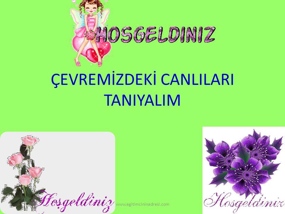 ÇEVREMİZDEKİ CANLILARI TANIYALIM www.egitimcininadresi.com