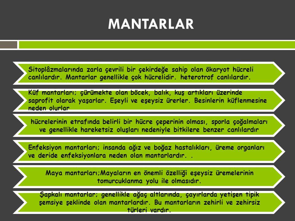 MANTARLAR Sitoplâzmalarında zarla çevrili bir çekirdeğe sahip olan ökaryot hücreli canlılardır. Mantarlar genellikle çok hücrelidir. heterotrof canlıl