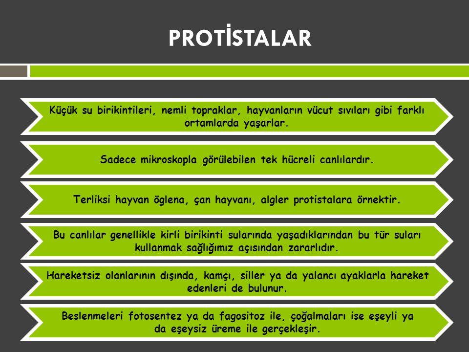 PROT İ STALAR
