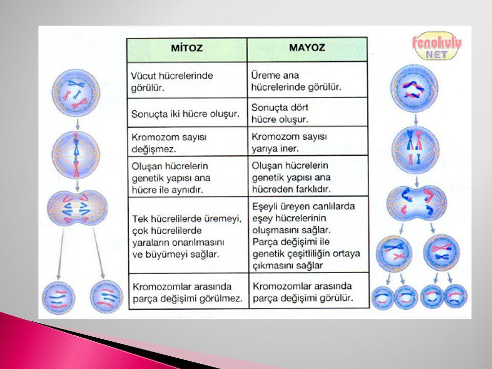  1)Bir kromozomun yapısında ; 1-DNA 2-RNA 3-Protein 4-Yağ moleküllerinden hangileri bulunur.