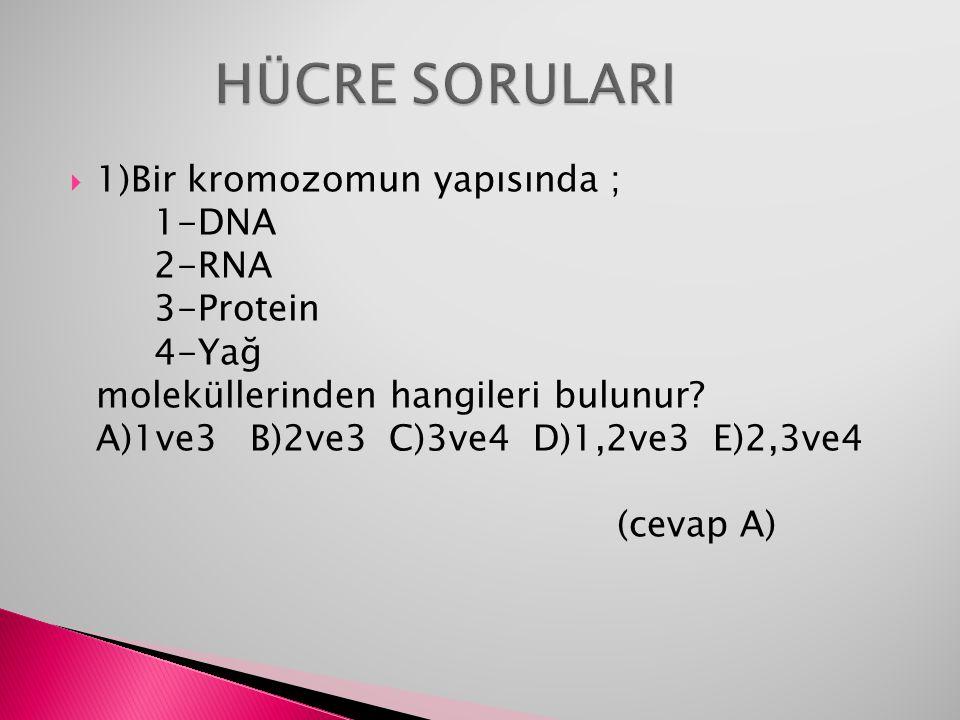  1)Bir kromozomun yapısında ; 1-DNA 2-RNA 3-Protein 4-Yağ moleküllerinden hangileri bulunur? A)1ve3B)2ve3 C)3ve4 D)1,2ve3 E)2,3ve4 (cevap A)