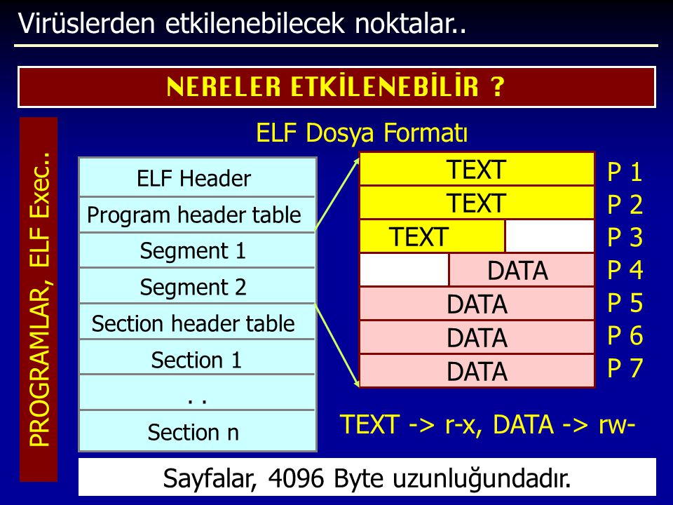 Virüslerden etkilenebilecek noktalar.. NERELER ETKİLENEBİLİR ? PROGRAMLAR, ELF Exec.. ELF Dosya Formatı ELF Header Program header table Segment 1 Segm