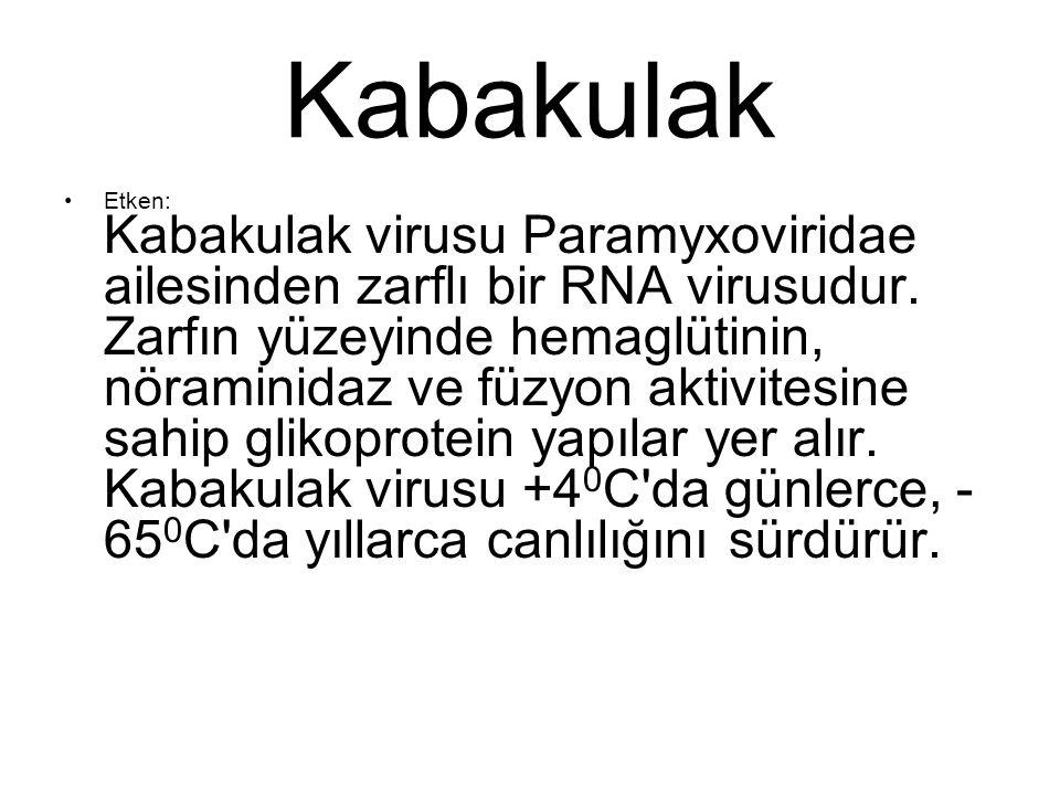 Kabakulak Etken: Kabakulak virusu Paramyxoviridae ailesinden zarflı bir RNA virusudur. Zarfın yüzeyinde hemaglütinin, nöraminidaz ve füzyon aktivitesi