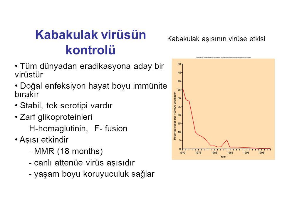 Kabakulak virüsün kontrolü Tüm dünyadan eradikasyona aday bir virüstür Doğal enfeksiyon hayat boyu immünite bırakır Stabil, tek serotipi vardır Zarf g