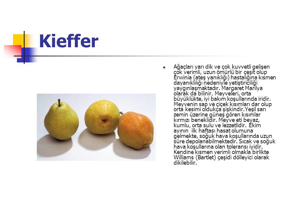 Kieffer Ağaçları yarı dik ve çok kuvvetli gelişen çok verimli, uzun ömürlü bir çeşit olup Erwinia (ateş yanıklığı) hastalığına kısmen dayanıklılığı nedeniyle yetiştiriciliği yaygınlaşmaktadır.