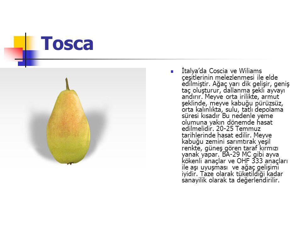 Tosca İtalya'da Coscia ve Wiliams çeşitlerinin melezlenmesi ile elde edilmiştir.