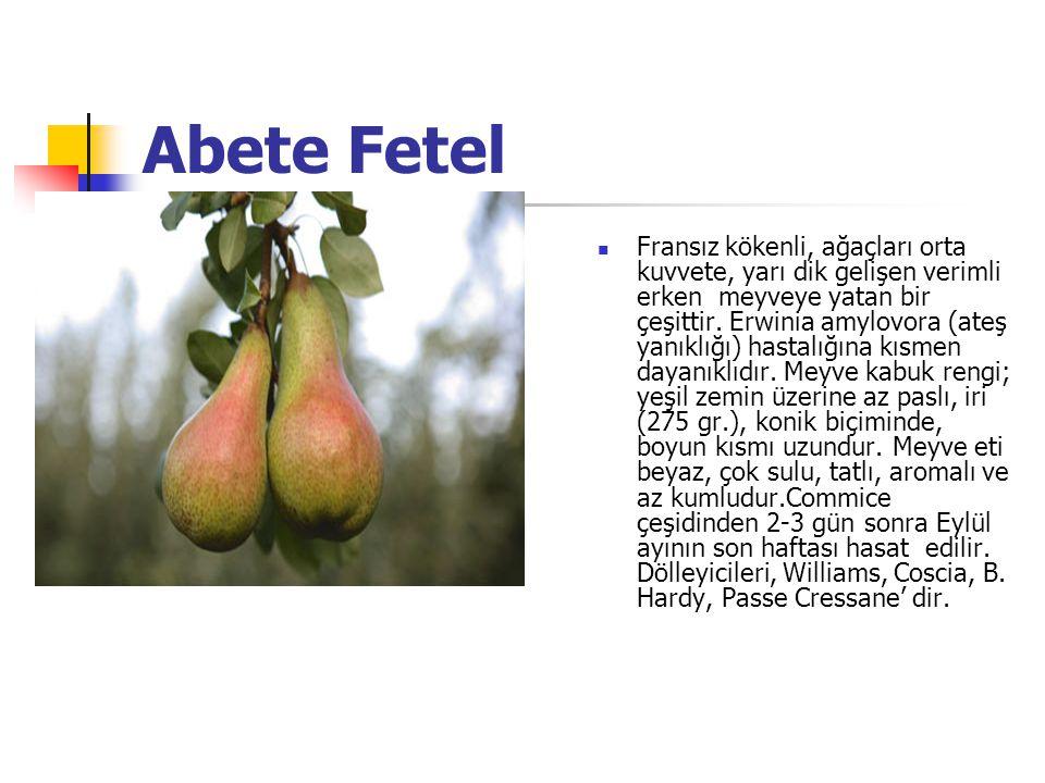Abete Fetel Fransız kökenli, ağaçları orta kuvvete, yarı dik gelişen verimli erken meyveye yatan bir çeşittir.