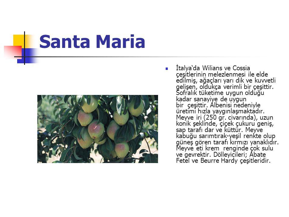 Santa Maria İtalya'da Wilians ve Cossia çeşitlerinin melezlenmesi ile elde edilmiş, ağaçları yarı dik ve kuvvetli gelişen, oldukça verimli bir çeşittir.