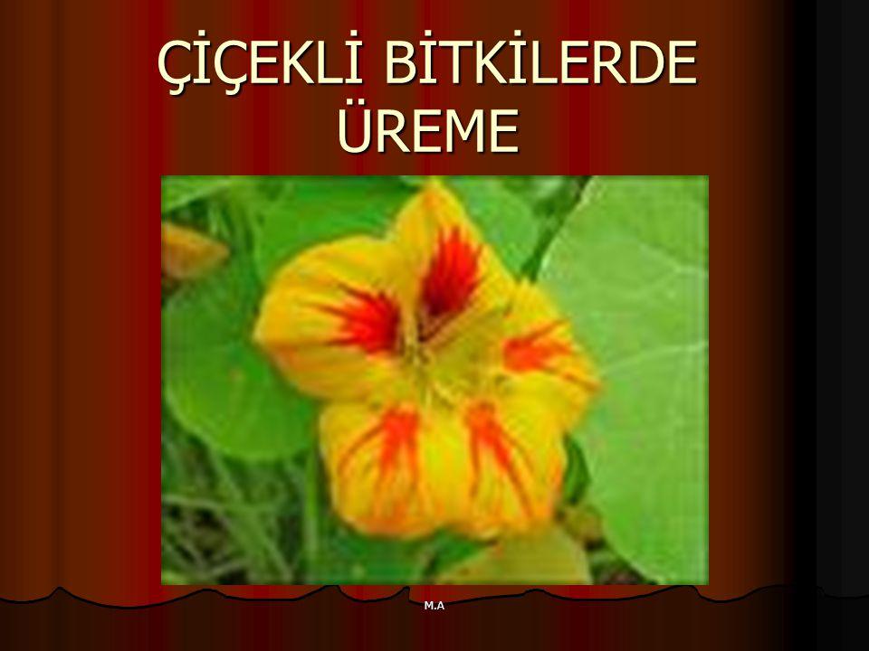 M.A ÇİÇEĞİN KISIMLARI: Yüksek yapılı bitkilerin üreme organına çiçek denir.