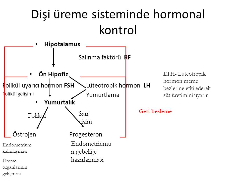 Dişi üreme sisteminde hormonal kontrol Hipotalamus Ön Hipofiz Yumurtalık Östrojen Salınma faktörü RF Folikül uyarıcı hormon FSH Folikül gelişimi Progesteron Lüteotropik hormon LH Yumurtlama Endometrium kalınlaşması Üreme organlarının gelişmesi Endometriumu n gebeliğe hazırlanması Folikül Sarı cisim Geri besleme LTH- Luteotropik hormon meme bezlerine etki ederek süt üretimini uyarır.