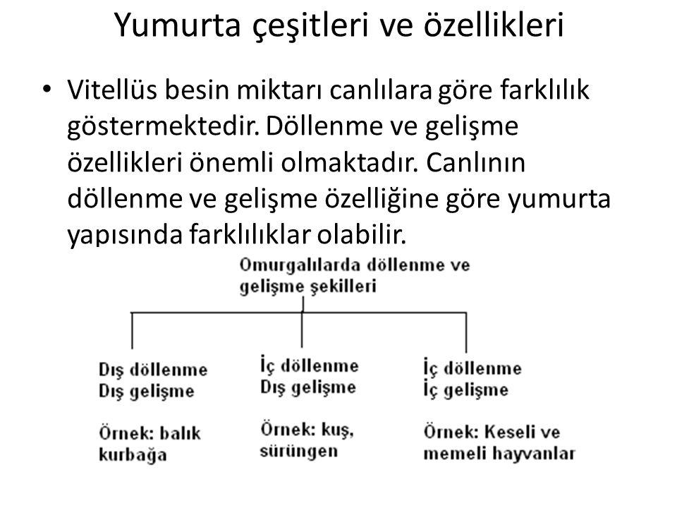 Yumurta çeşitleri ve özellikleri Vitellüs besin miktarı canlılara göre farklılık göstermektedir.