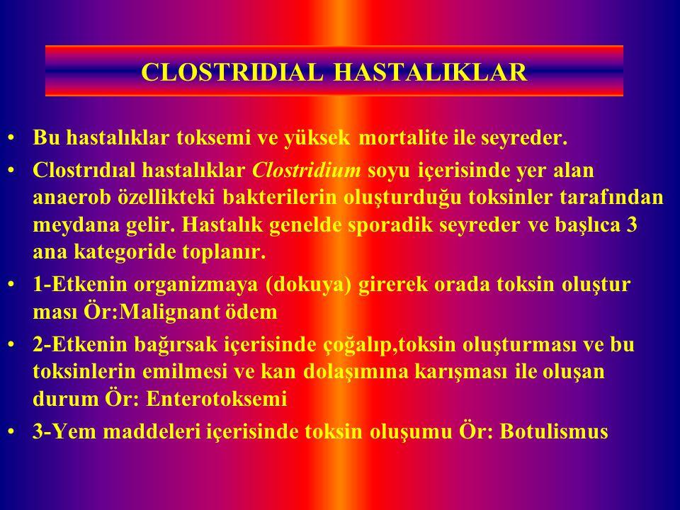 CLOSTRIDIAL HASTALIKLAR Bu hastalıklar toksemi ve yüksek mortalite ile seyreder. Clostrıdıal hastalıklar Clostridium soyu içerisinde yer alan anaerob