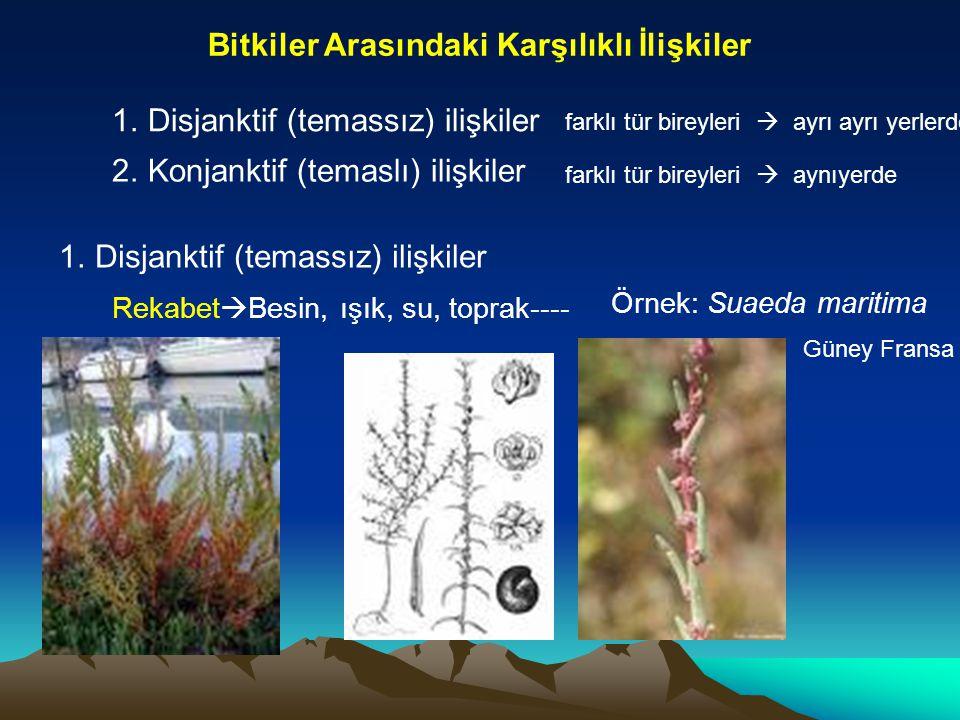 Bitkiler Arasındaki Karşılıklı İlişkiler 1.Disjanktif (temassız) ilişkiler 2.Konjanktif (temaslı) ilişkiler 1.Disjanktif (temassız) ilişkiler farklı t