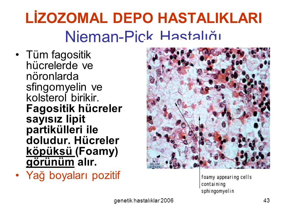 genetik hastalıklar 200643 LİZOZOMAL DEPO HASTALIKLARI Nieman-Pick Hastalığı Tüm fagositik hücrelerde ve nöronlarda sfingomyelin ve kolsterol birikir.