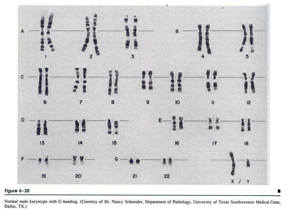 genetik hastalıklar 200680