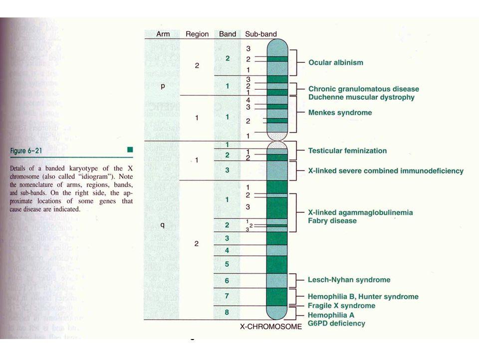 genetik hastalıklar 200681
