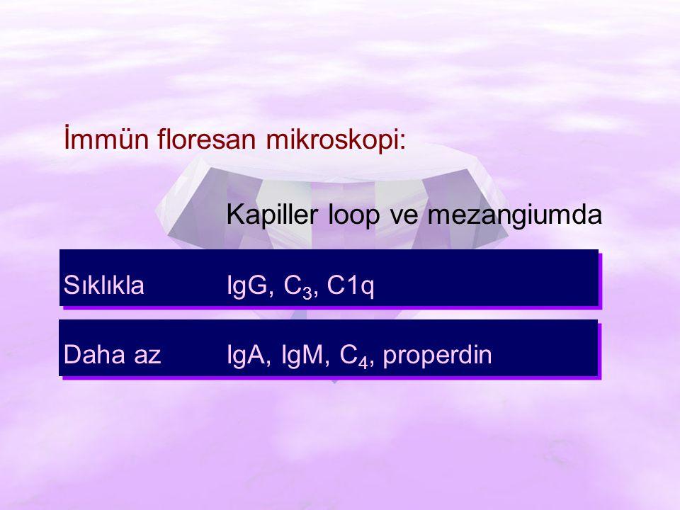 İmmün floresan mikroskopi: Kapiller loop ve mezangiumda Sıklıkla IgG, C 3, C1q Daha azIgA, IgM, C 4, properdin