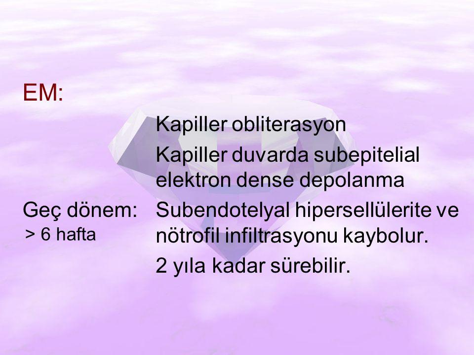 EM: Kapiller obliterasyon Kapiller duvarda subepitelial elektron dense depolanma Geç dönem:Subendotelyal hipersellülerite ve nötrofil infiltrasyonu kaybolur.