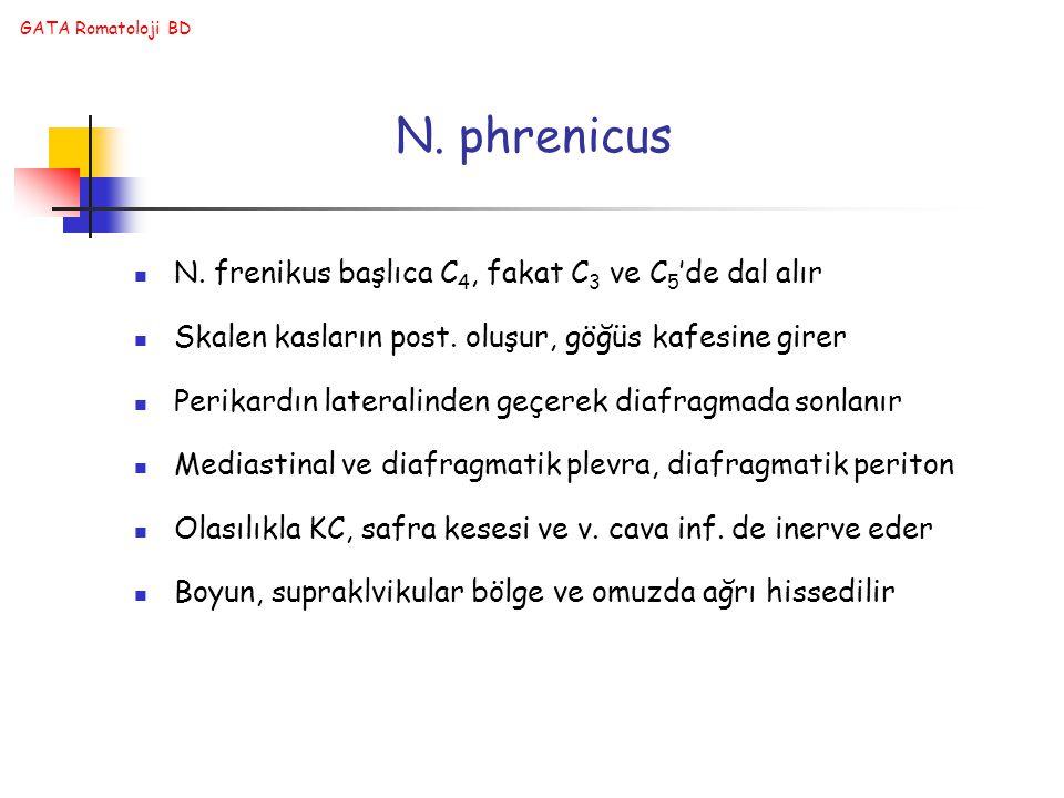 GATA Romatoloji BD N. frenikus başlıca C 4, fakat C 3 ve C 5 'de dal alır Skalen kasların post. oluşur, göğüs kafesine girer Perikardın lateralinden g