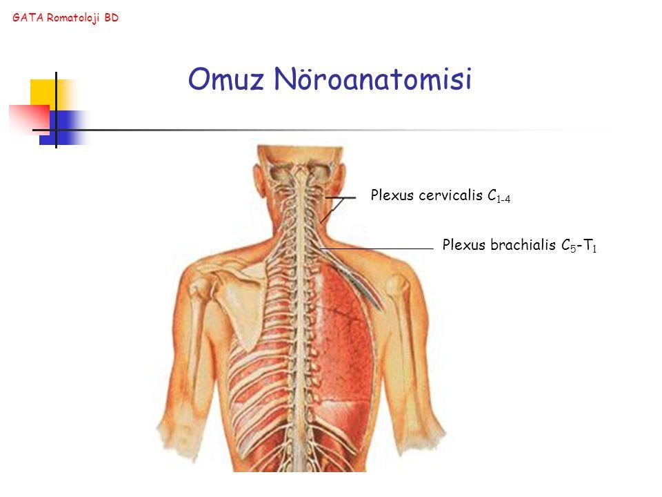 GATA Romatoloji BD Omuz Nöroanatomisi Plexus cervicalis C 1-4 Plexus brachialis C 5 -T 1