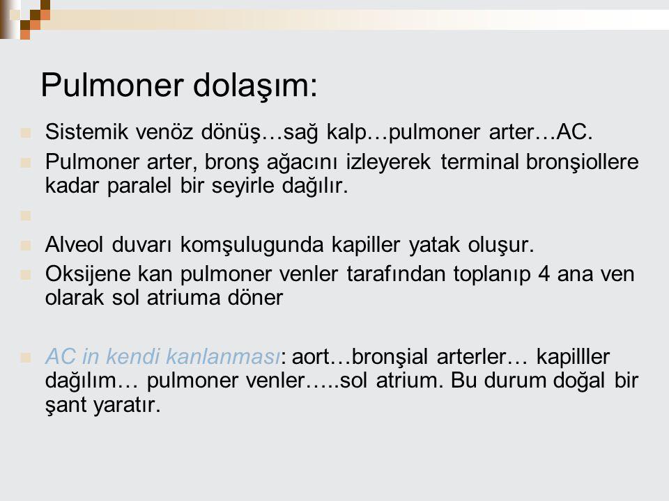 Pulmoner dolaşım: Sistemik venöz dönüş…sağ kalp…pulmoner arter…AC. Pulmoner arter, bronş ağacını izleyerek terminal bronşiollere kadar paralel bir sey