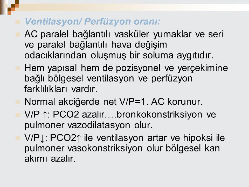 Ventilasyon/ Perfüzyon oranı: AC paralel bağlantılı vasküler yumaklar ve seri ve paralel bağlantılı hava değişim odacıklarından oluşmuş bir soluma ayg