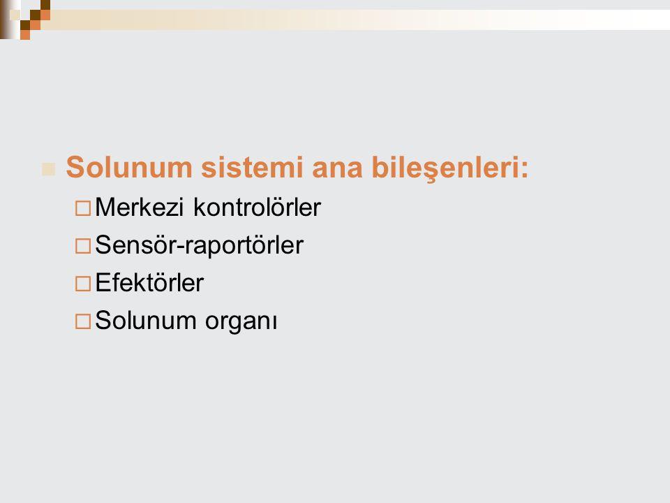 Solunum sistemi ana bileşenleri:  Merkezi kontrolörler  Sensör-raportörler  Efektörler  Solunum organı