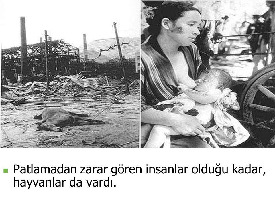 Patlamadan zarar gören insanlar olduğu kadar, hayvanlar da vardı.