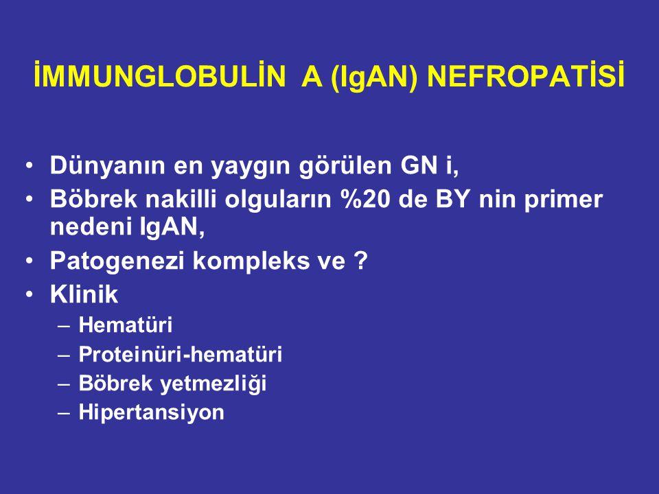 Dünyanın en yaygın görülen GN i, Böbrek nakilli olguların %20 de BY nin primer nedeni IgAN, Patogenezi kompleks ve ? Klinik –Hematüri –Proteinüri-hema
