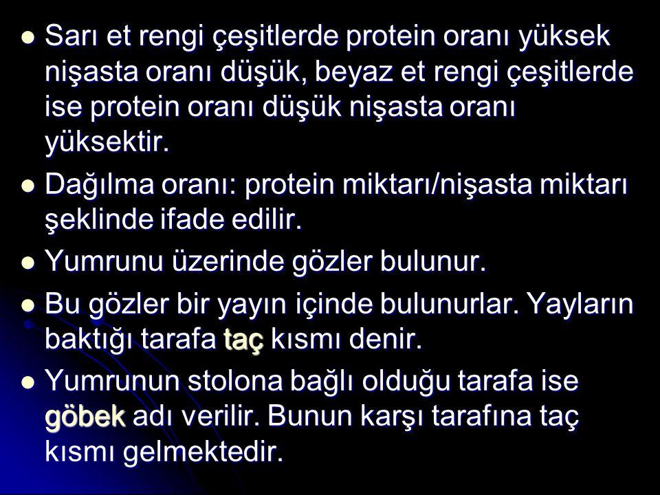 Sarı et rengi çeşitlerde protein oranı yüksek nişasta oranı düşük, beyaz et rengi çeşitlerde ise protein oranı düşük nişasta oranı yüksektir. Sarı et