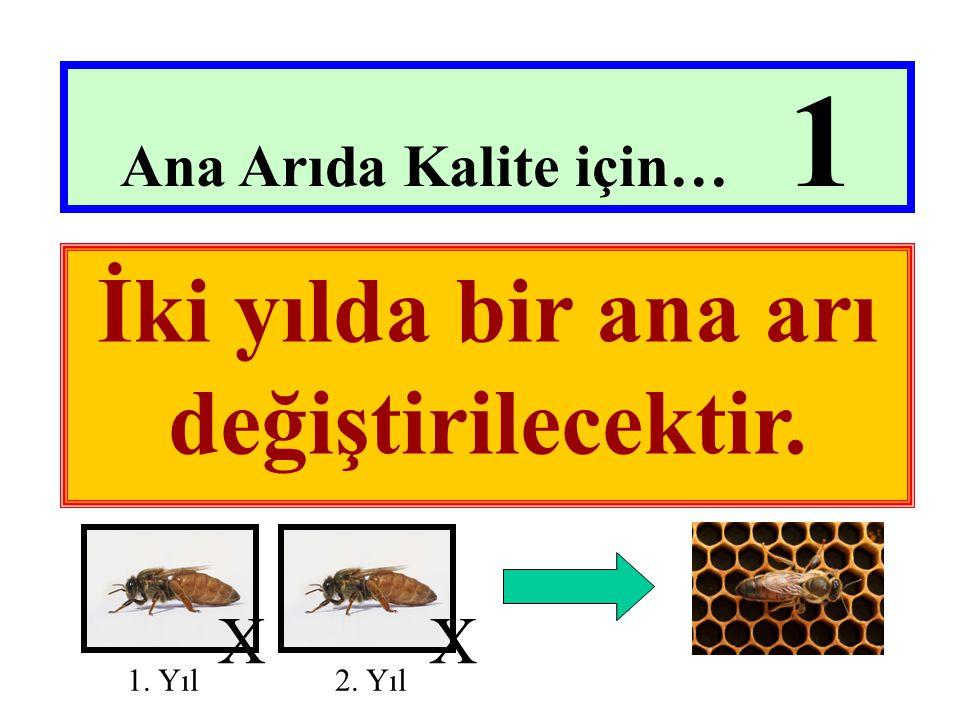 Ana Arıda Kalite için… 1 İki yılda bir ana arı değiştirilecektir. 1. Yıl 2. Yıl XX