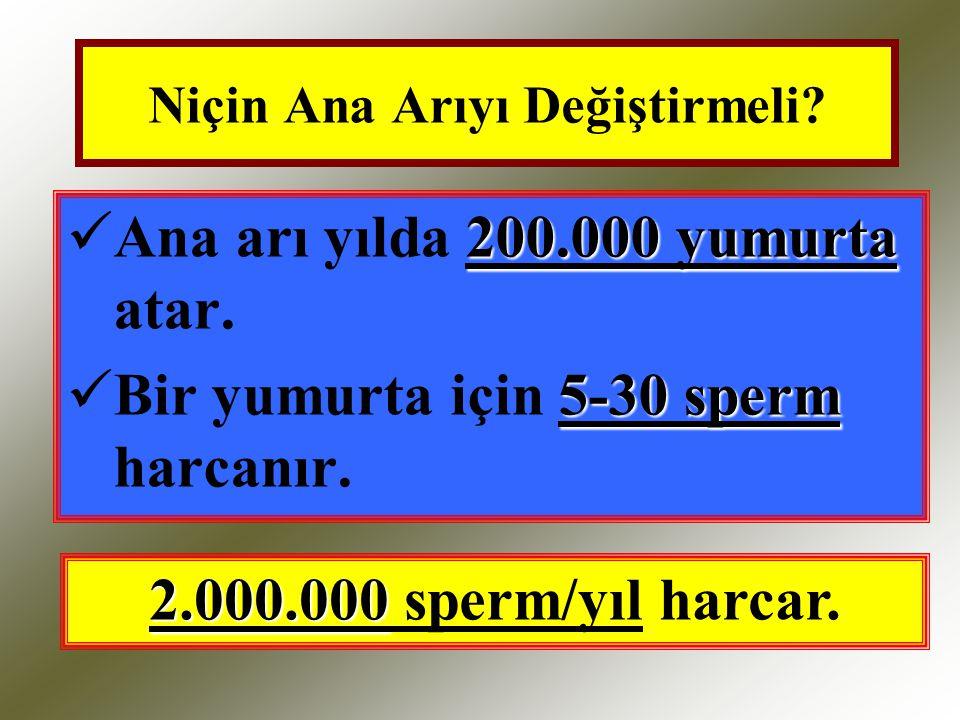 Niçin Ana Arıyı Değiştirmeli? 200.000 yumurta Ana arı yılda 200.000 yumurta atar. 5-30 sperm Bir yumurta için 5-30 sperm harcanır. 2.000.000 2.000.000