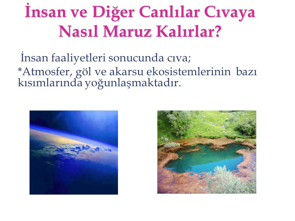 İnsan ve Diğer Canlılar Cıvaya Nasıl Maruz Kalırlar? İnsan faaliyetleri sonucunda cıva; *Atmosfer, göl ve akarsu ekosistemlerinin bazı kısımlarında yo