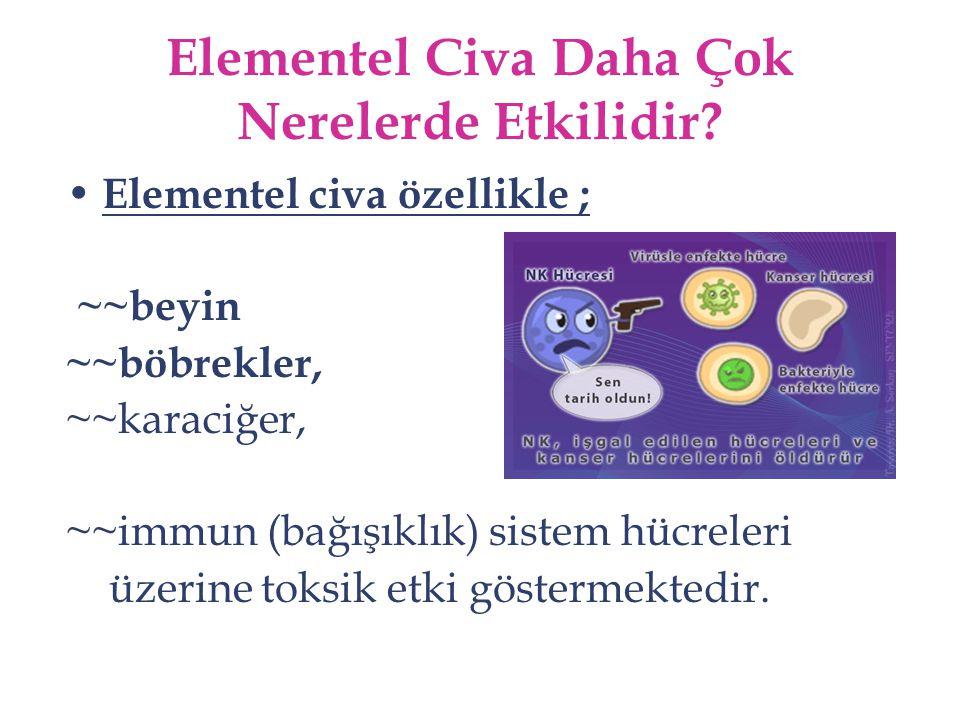 Elementel Civa Daha Çok Nerelerde Etkilidir? Elementel civa özellikle ; ~~beyin ~~böbrekler, ~~karaciğer, ~~immun (bağışıklık) sistem hücreleri üzerin