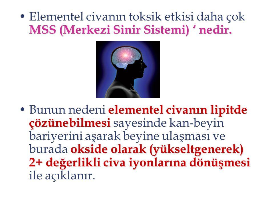 MSS (Merkezi Sinir Sistemi) ' nedir.Elementel civanın toksik etkisi daha çok MSS (Merkezi Sinir Sistemi) ' nedir. elementel civanın lipitde çözünebilm