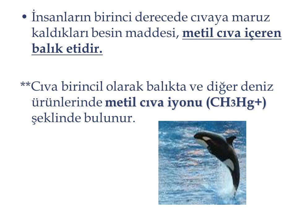 İnsanların birinci derecede cıvaya maruz kaldıkları besin maddesi, metil cıva içeren balık etidir. metil cıva iyonu (CH 3 Hg+) **Cıva birincil olarak