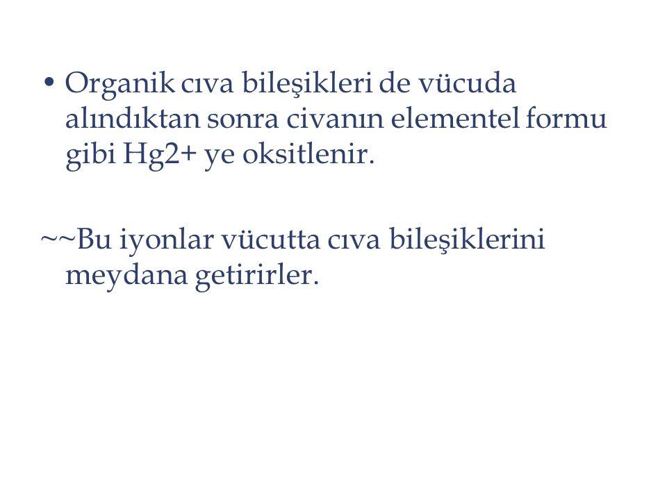 Organik cıva bileşikleri de vücuda alındıktan sonra civanın elementel formu gibi Hg2+ ye oksitlenir. ~~Bu iyonlar vücutta cıva bileşiklerini meydana g