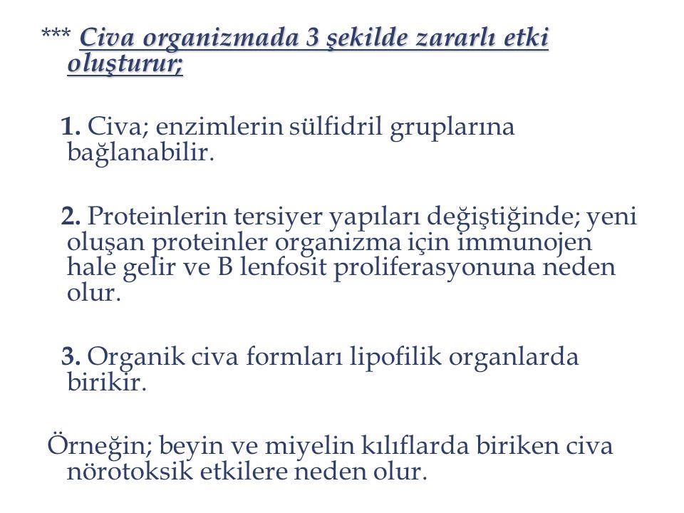 Civa organizmada 3 şekilde zararlı etki oluşturur; *** Civa organizmada 3 şekilde zararlı etki oluşturur; 1. Civa; enzimlerin sülfidril gruplarına bağ