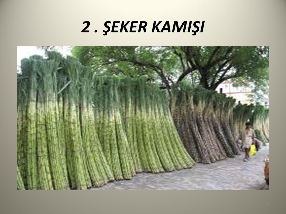 Şeker kamışı, buğdaygiller familyasından şeker elde edilen bir bitkidir.