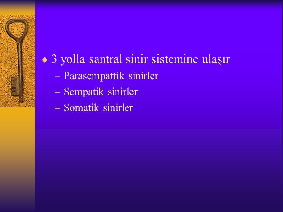  3 yolla santral sinir sistemine ulaşır –Parasempattik sinirler –Sempatik sinirler –Somatik sinirler