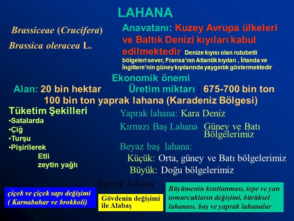LAHANA Anavatanı: Kuzey Avrupa ülkeleri ve Baltık Denizi kıyıları kabul edilmektedir. Denize kıyısı olan rutubetli bölgeleri sever, Fransa'nın Atlanti