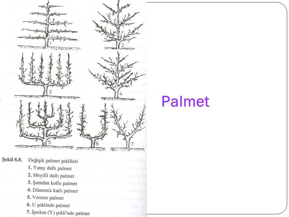 Palmet